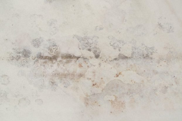 altération du papier par multiples moisissures en attente d'être traitées par l'atelier de restauration Les Baguettes Magiques à Lyon